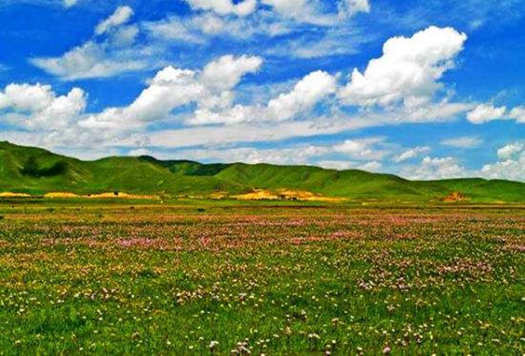 若爾蓋、花湖大草原環線三日游