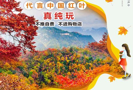 中国红叶第一山—光雾山纯玩三日游